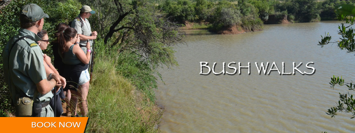 bush_walks_mankwe_gametrackers-opt