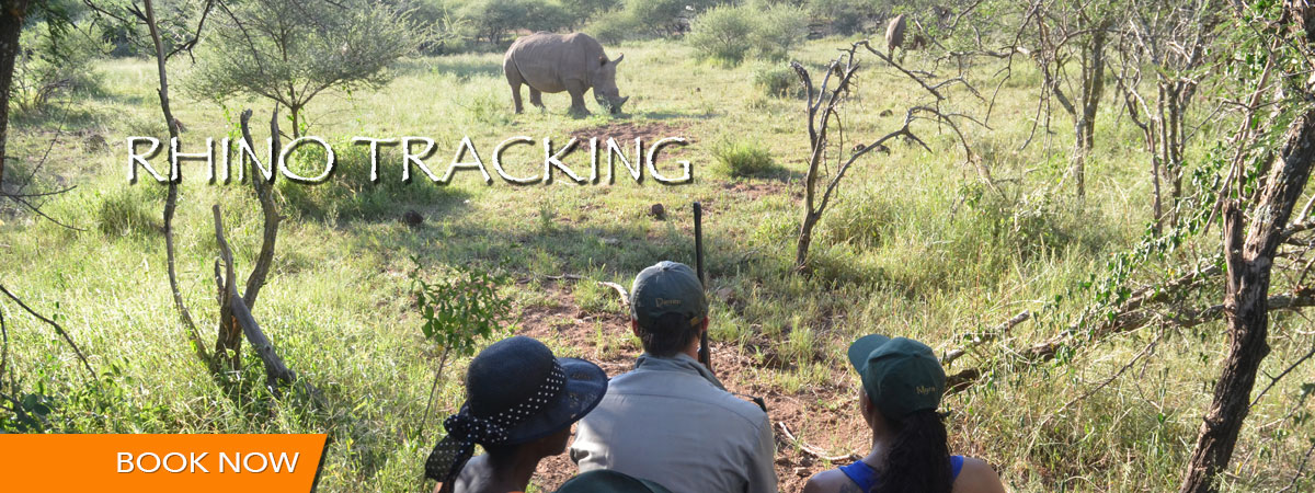 rhino_tracking_mankwe_gametrackers-opt