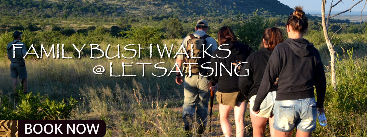 FAMILYBUSHWALKS_Mankwe_Gametrackers-Otp-3-2