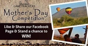 Mother's Day Competition - Mankwe GAMETRACKERS - Pilanesberg South Africa