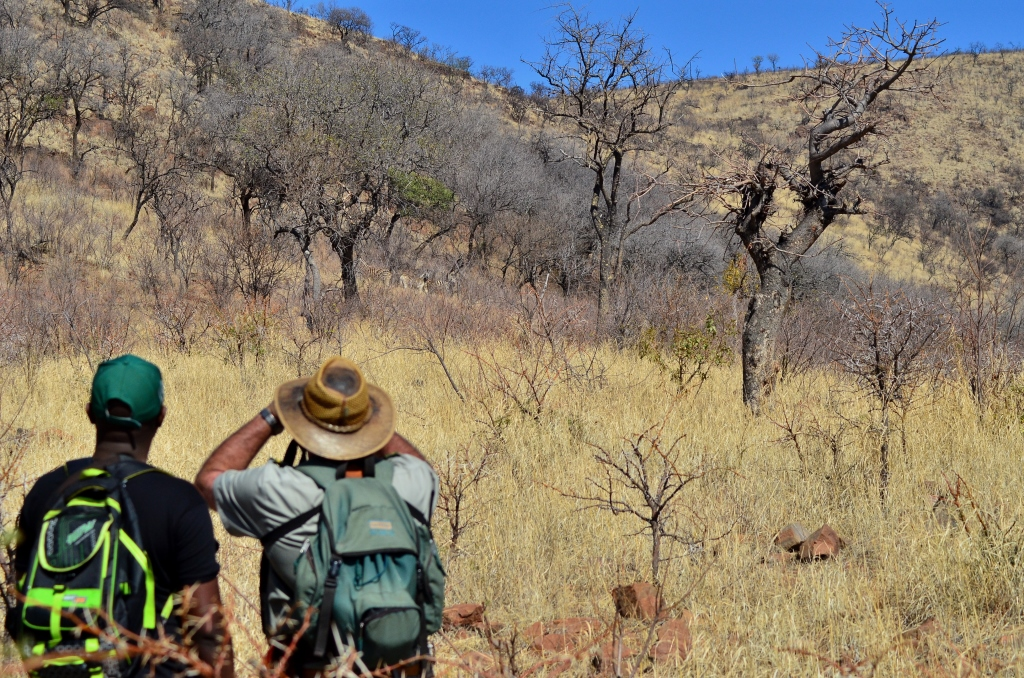 Bushwalks_Pilanesberg National Park