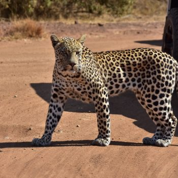 Game drives/Safaris South Africa Mankwe Gametrackers _Pilanesberg National Park