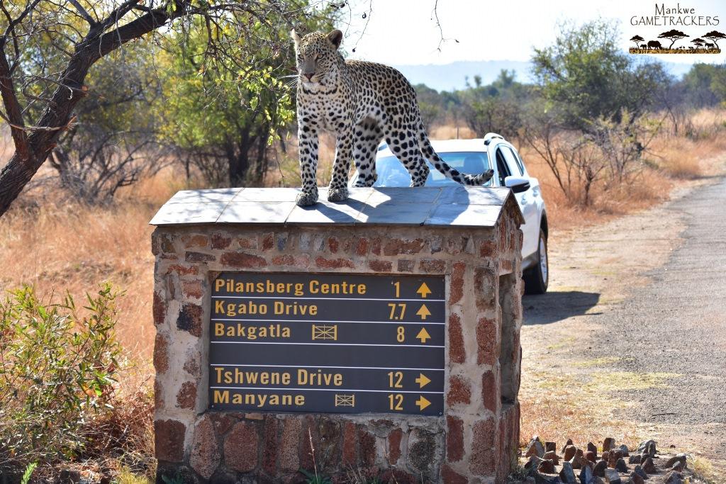 Game drives/Safaris South Africa Mankwe Gametrackers _Pilanesberg National Park