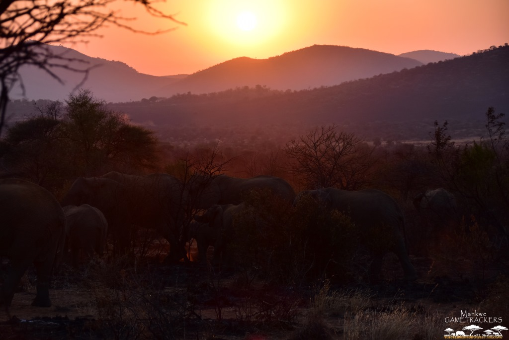 Game-drivesSafaris-South-Africa-Mankwe-Gametrackers-_Pilanesberg-National-Park-North-West-South-Africa-7