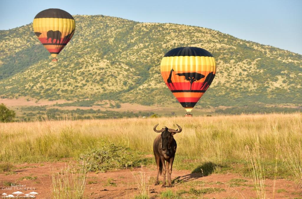 Hot air balloon flight/Safari South Africa Mankwe Gametrackers _Pilanesberg National Park, North West South Africa