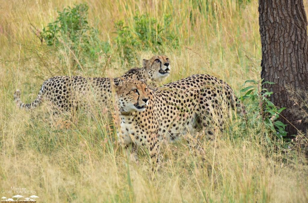 Game drives/Safaris South Africa Mankwe Gametrackers _Pilanesberg National Park, North West South Africa