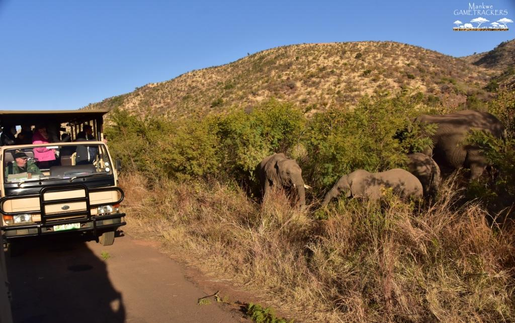 Mankwe GAMETRACKERS - Elephants on a Game Drive