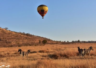 Mankwe GAMETRACKERS - Hot air balloon flying over zebras