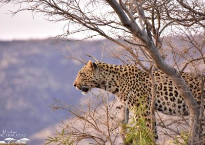 Mankwe GAMETRACKERS - Leopard